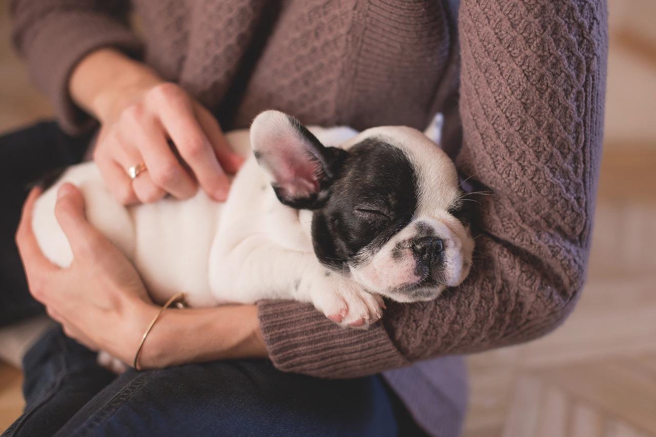 chien dans les bras d'une femme