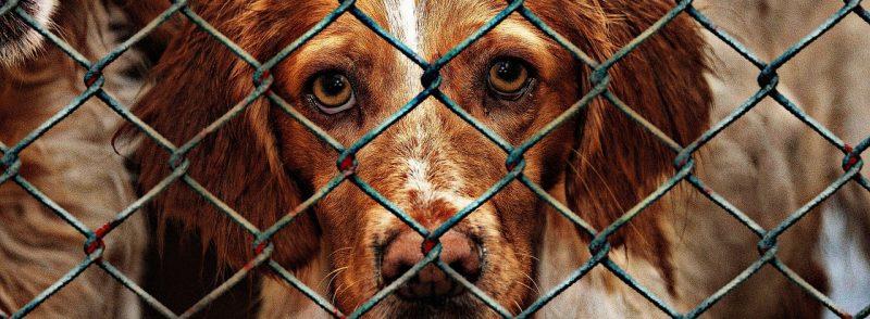 refuge pour chiens