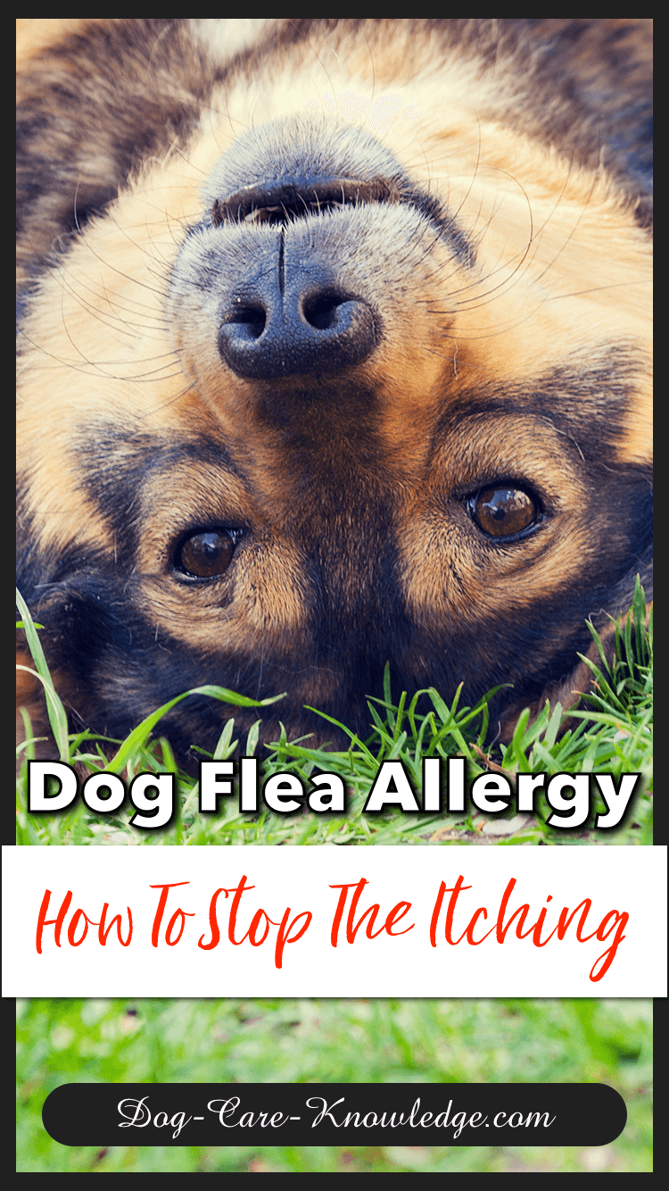 Comment arrêter les démangeaisons du chien ?