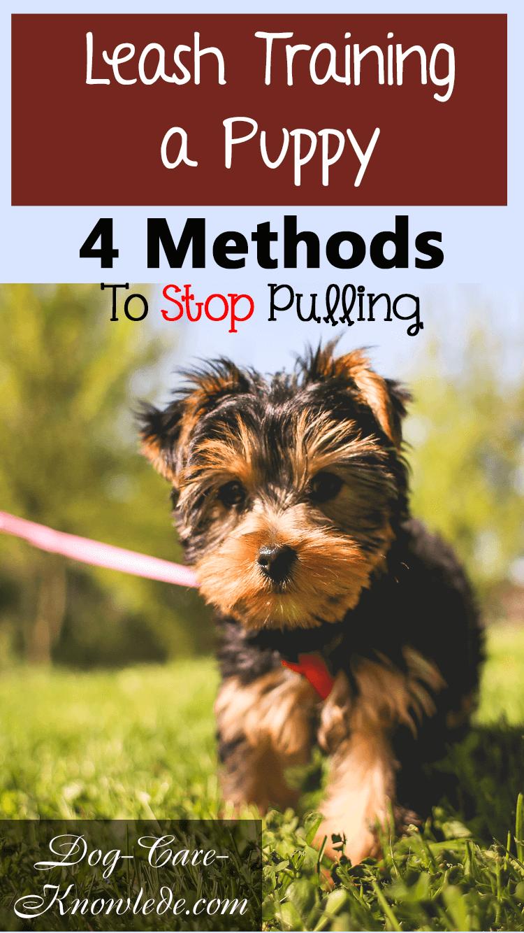 4 solutions faciles si votre chien tire trop sur sa laisse