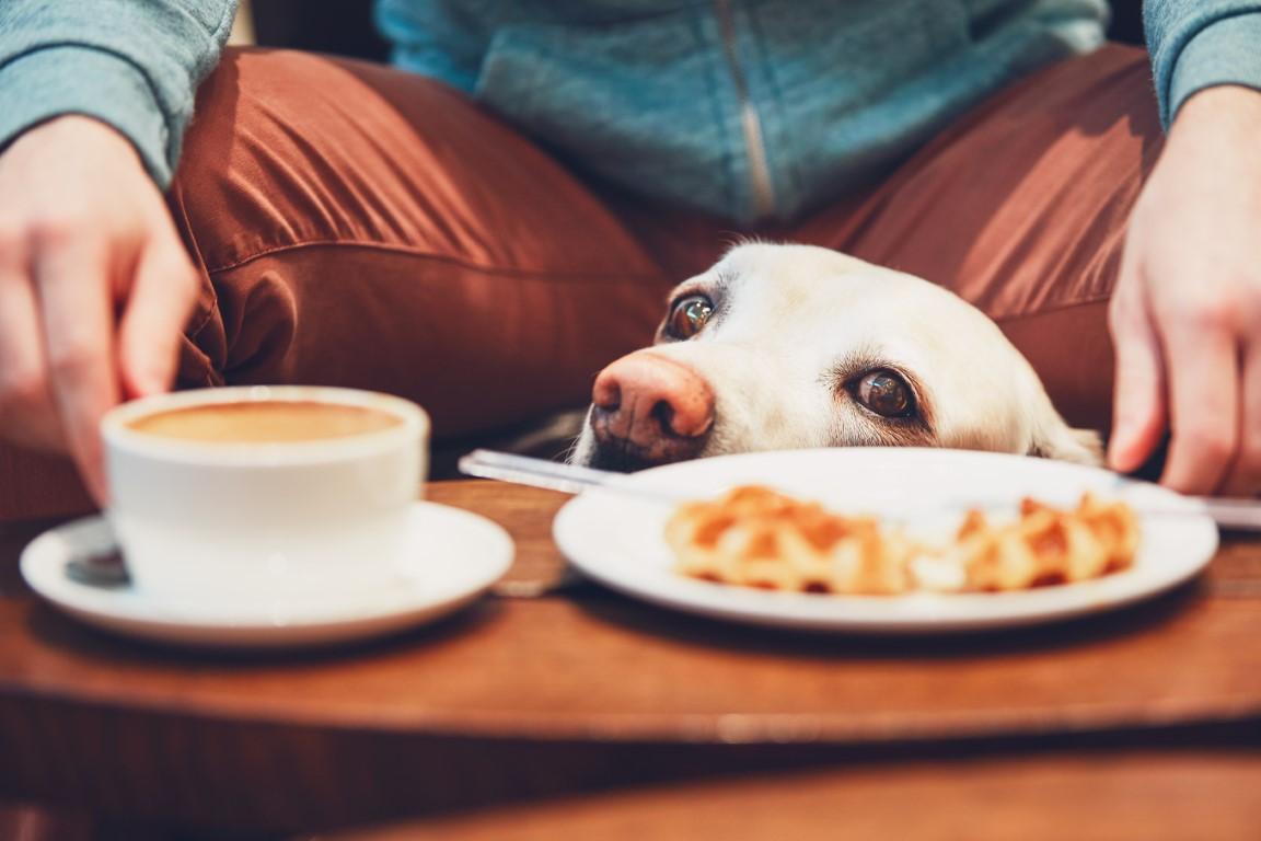 Chien curieux devant un café