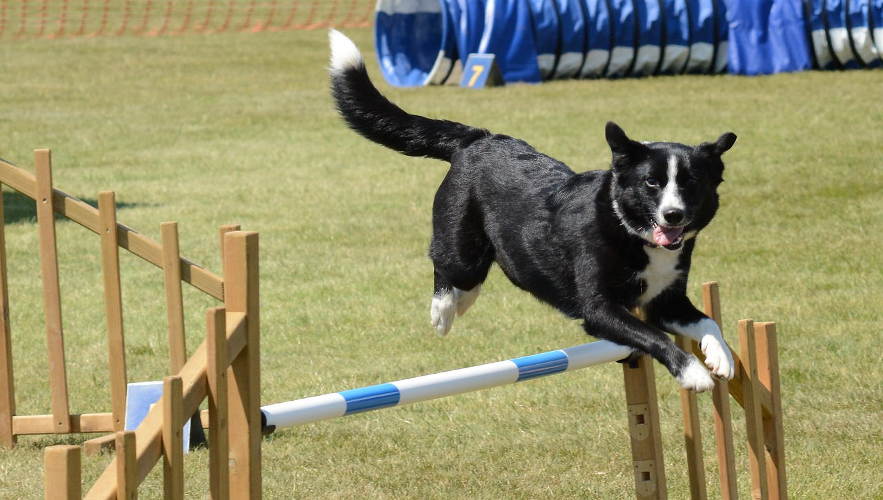 Le sport canin : de quoi créer des liens!