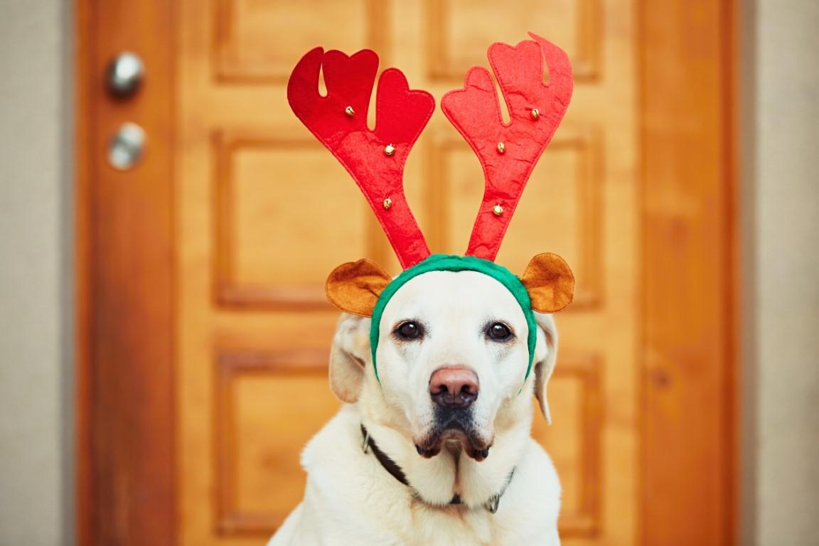Fêtes de fin d'année : les aliments à ne pas donner à votre chien
