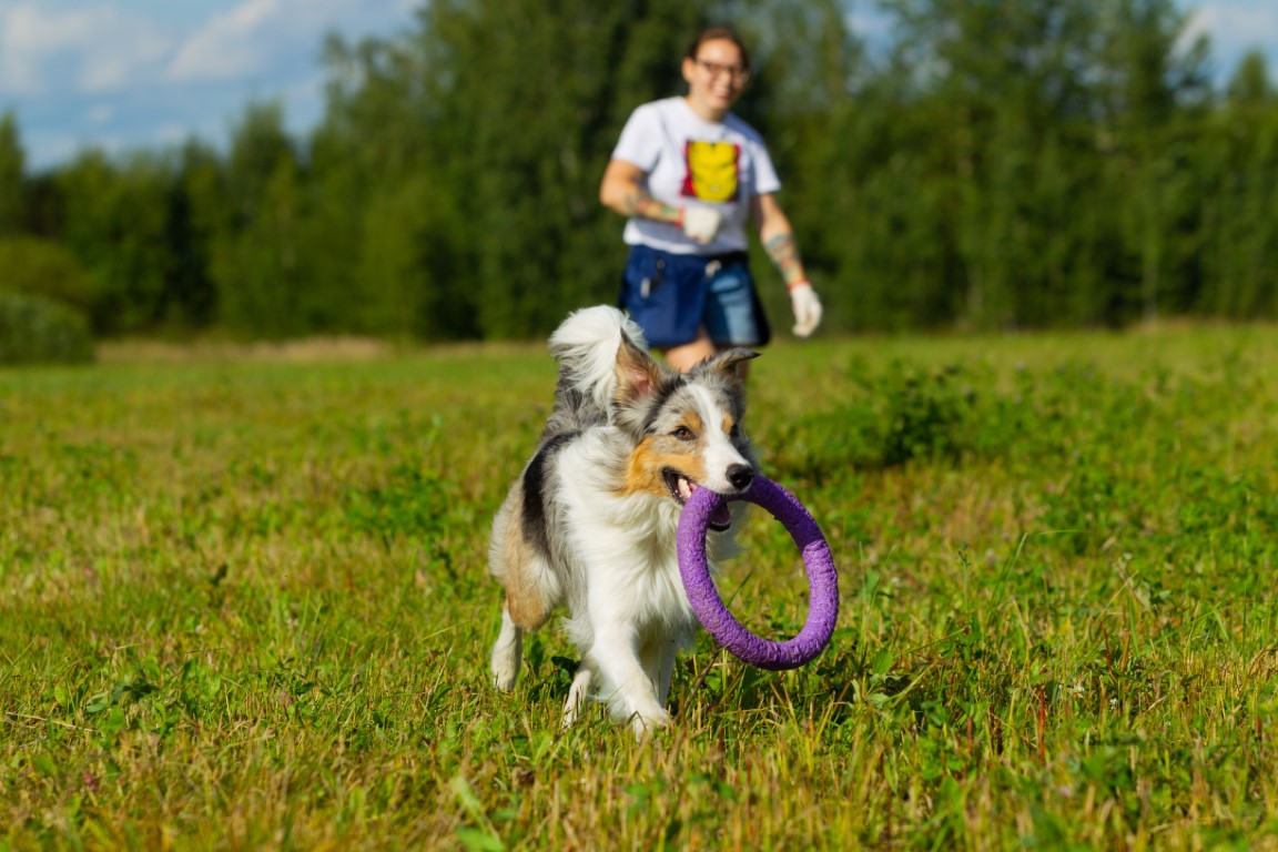 5 astuces pour un chien bien dans ses pattes !