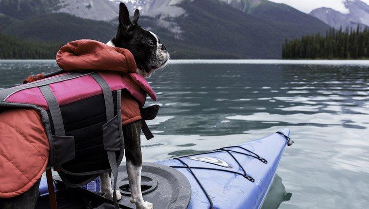 Comment choisir un gilet de sauvetage pour mon chien?