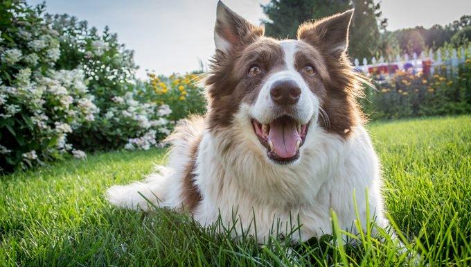 10 secrets pas si secrets pour avoir un chien heureux