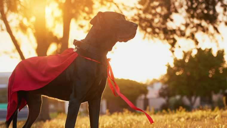 5 chiens héroïques qui ont sauvé la vie des gens