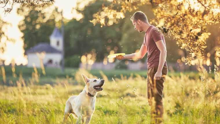 5 raisons de jouer souvent avec votre chien