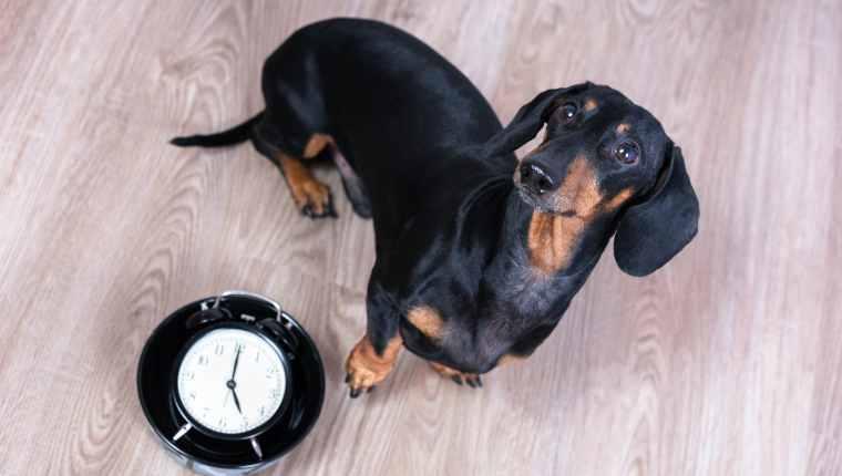 La routine est-elle importante pour les chiens? Peut-elle les garder en bonne santé?