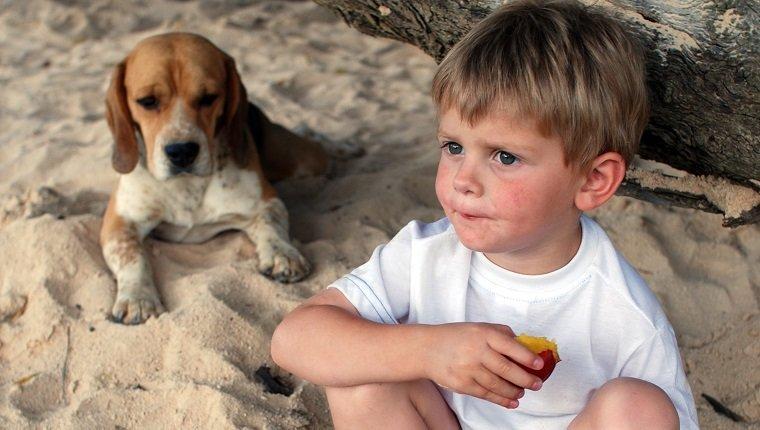 Les chiens peuvent-ils manger des pêches?