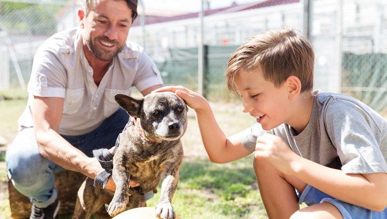 Faut-il changer le nom d'un chien adopté en refuge ?