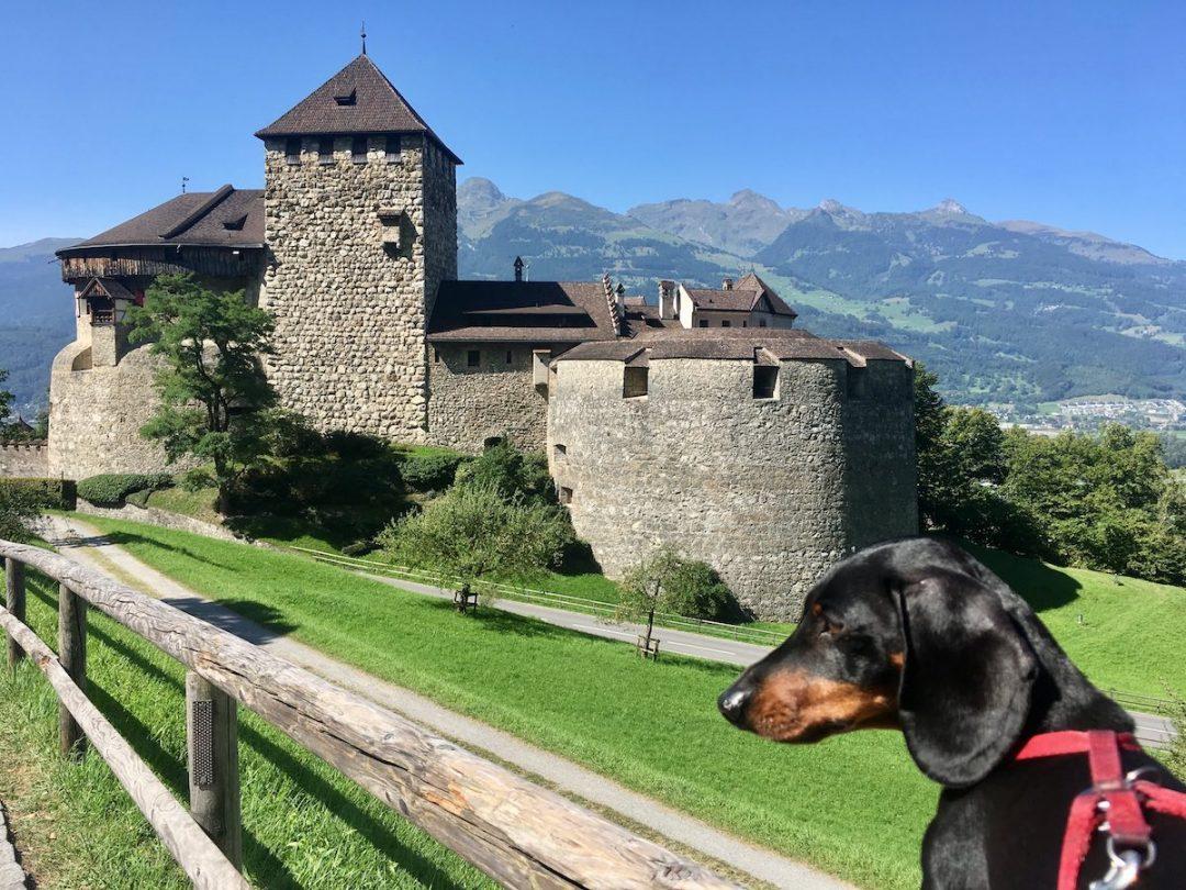 5 lieux à visiter en Europe avec votre chien